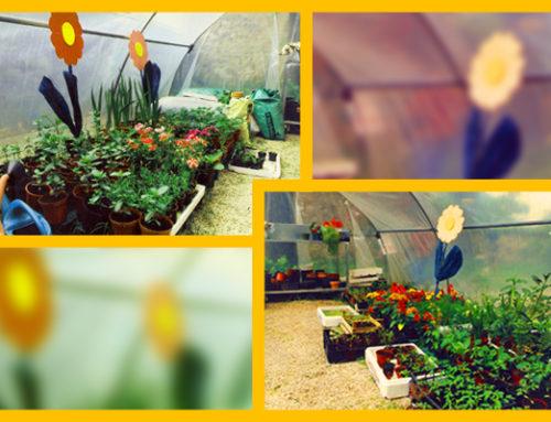 Una serra e un orto per educare all'ambiente